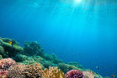 Ocean Underwater Background Image — Stock Photo