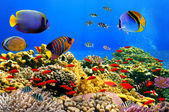 Photo of a coral colony on a reef — Stock Photo