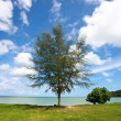 Scenics tree with perspective cloud — Stock Photo