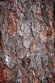 Bark Tree — Stock fotografie