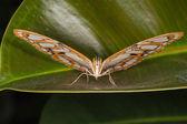 Prachtige vlinder close-up — Stockfoto