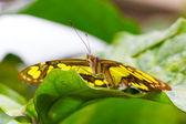 Beautiful Butterfly closeup — Stock Photo