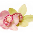 Orchids — Stock Photo #12114229