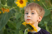 Dreaming boy with sunflower — Stock fotografie