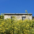 Royalty-Free Stock Photo: Wild  yellow flowers with rustic house in background