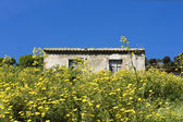 Wild yellow flowers with rustic house in background — Stock Photo