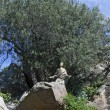 Jesus under an olive tree — Foto Stock