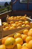 Oranges in wooden boxes — Stock Photo