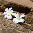 Three white frangipani (plumeria) spa flowers on rough stones — Stock Photo