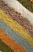 Colorful striped rows of dry grains — Stock Photo