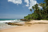Tropical paradise with trees on beach against blue sky with clo — Foto Stock
