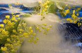 Frozen yellow flower — Stock Photo