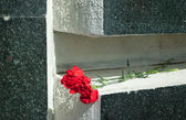 Carnation on marble — Photo