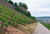 Vineyard. Germany.Wurzbyrg — Stock Photo