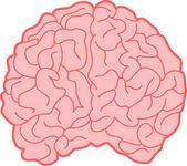 Human Brain — Stockvektor