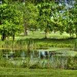 Golf scenery 2 — Stock Photo