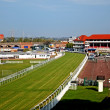 Stock Photo: Thoroughbred racetrack