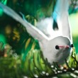 Stock Photo: Decorative bird shape ornament