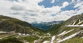 Evropská alpské serpentine — Stock fotografie