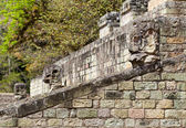 Maya ruins in jungle Copan — Stock Photo