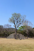 Lonely tree with maya ruins — Stock Photo