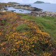 Wild irish flowers and scarriff islands coastal view — Stockfoto