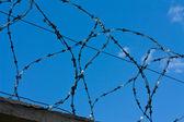 Arames farpados e céu azul — Foto Stock