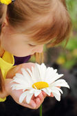 Beautiful camomile flower in the hands of pretty little girl — Stock Photo