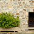 Stone wall with window and plants — Stock Photo