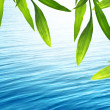 Beautiful bamboo background with blue water — Stok Fotoğraf #10865154
