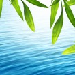 Beautiful bamboo background with blue water — Photo #10865154