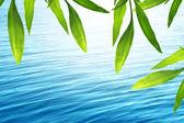 Schöne bambus hintergrund mit blauem wasser — Stockfoto
