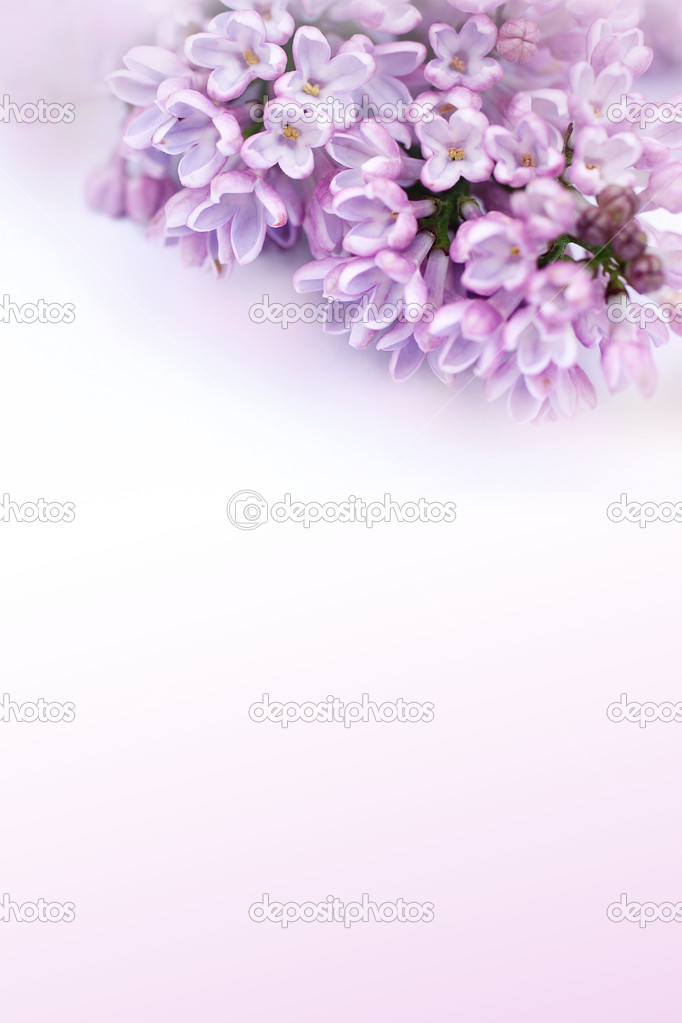 Beautiful, romantic background with lilac flowers  Stock Photo #10865743