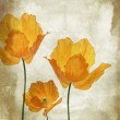 Pretty, orange, poppies grungy background — Stock Photo