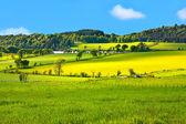 Mooie, lente landschap — Stockfoto