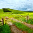 Spring rural landscape in Scotland — Stock Photo