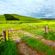 Spring rural landscape in Scotland - 
