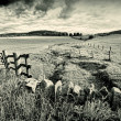 Spring rural landscape with stone wall,  Scotland — ストック写真