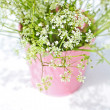 White wildflowers in a pink flowerpot — Foto Stock