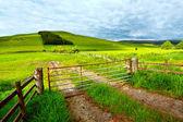 Spring rural landscape in Scotland — Stock Photo
