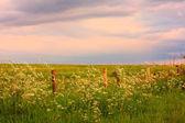 Schottischer landschaftlich — Stockfoto