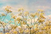 Bílé květy proti modré obloze — Stock fotografie