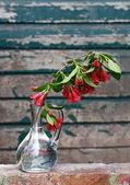 Ein zweig der frühlingsblumen in einer glasvase — Stockfoto
