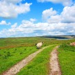 English landscape with fields and sheep — Stock Photo