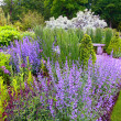 Foto de Stock  : Garden landscaping, blooming salvia