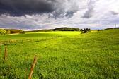 Skotské krajiny s poli. — Stock fotografie