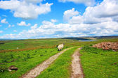Paisaje inglés con campos y ovejas — Foto de Stock