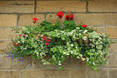 Collection of Summer flowers on the wall — Stock Photo