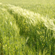 Cereals and other plants in the field — Stock Photo