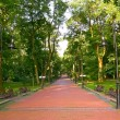 Paved park alley in the morning — Stock Photo